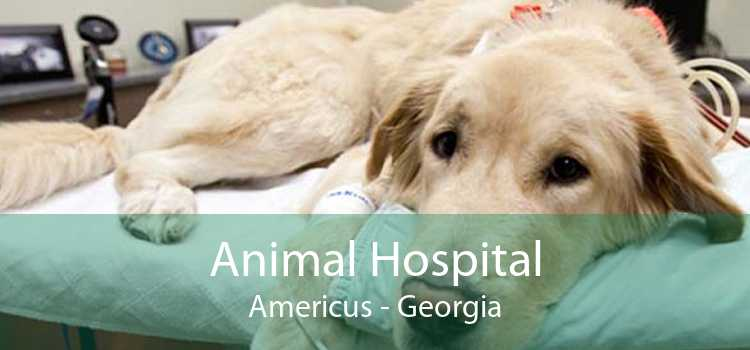 Animal Hospital Americus - Georgia