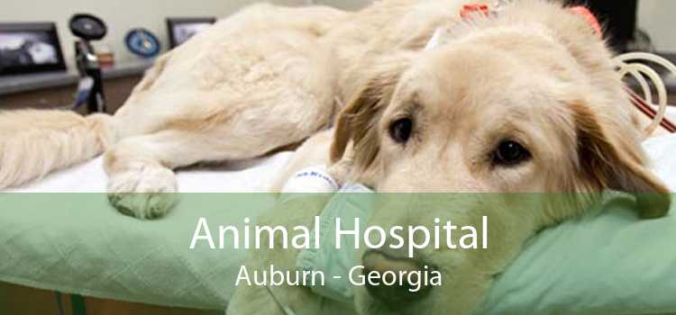 Animal Hospital Auburn - Georgia