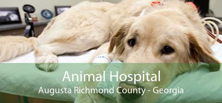 Animal Hospital Augusta Richmond County - Georgia