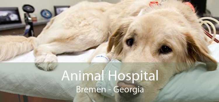 Animal Hospital Bremen - Georgia