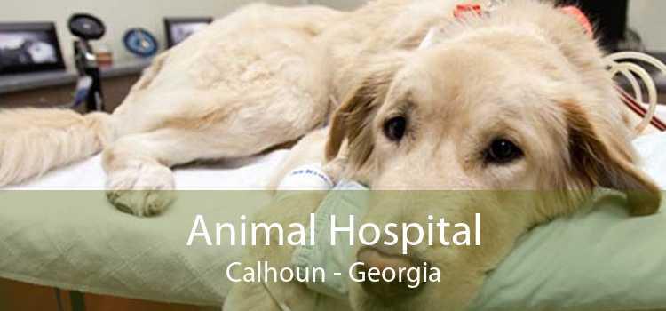 Animal Hospital Calhoun - Georgia