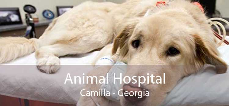 Animal Hospital Camilla - Georgia