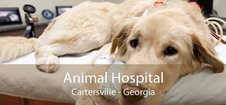 Animal Hospital Cartersville - Georgia