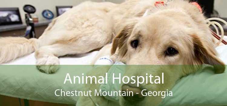 Animal Hospital Chestnut Mountain - Georgia