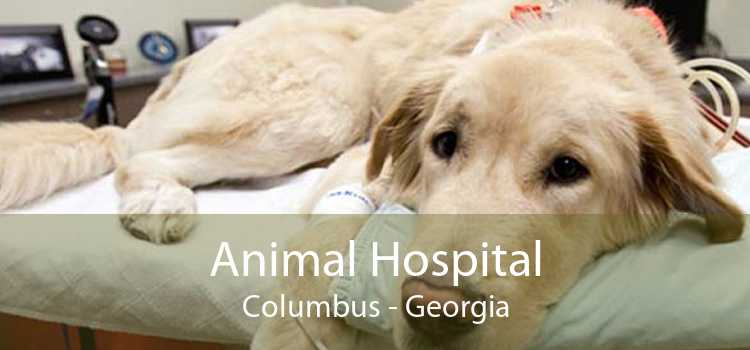 Animal Hospital Columbus - Georgia