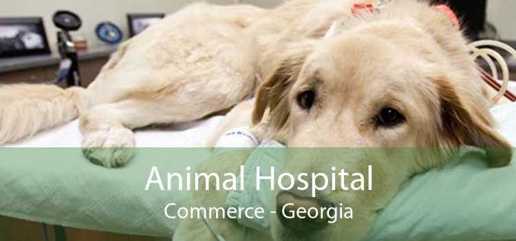 Animal Hospital Commerce - Georgia