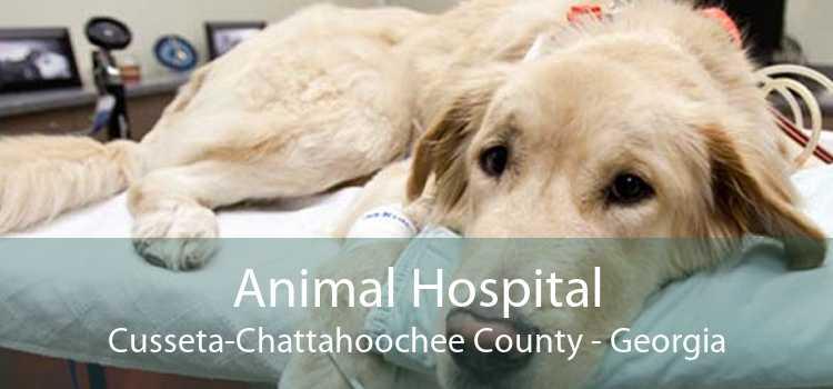 Animal Hospital Cusseta Chattahoochee County - Georgia