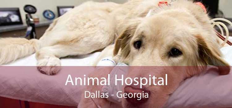 Animal Hospital Dallas - Georgia