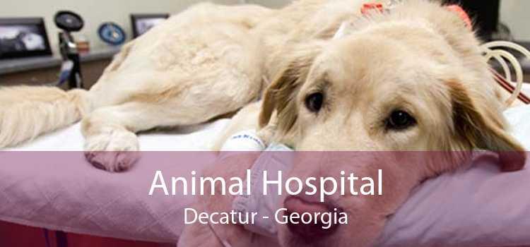 Animal Hospital Decatur - Georgia