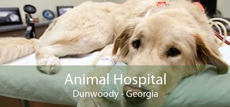 Animal Hospital Dunwoody - Georgia
