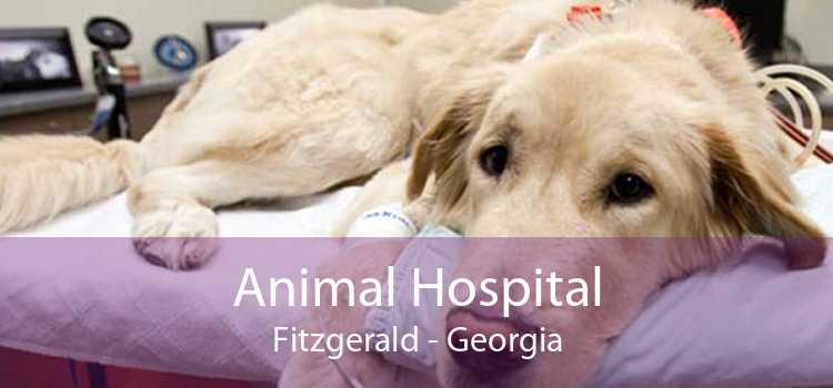 Animal Hospital Fitzgerald - Georgia