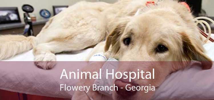 Animal Hospital Flowery Branch - Georgia