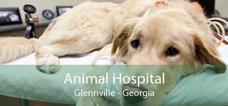 Animal Hospital Glennville - Georgia