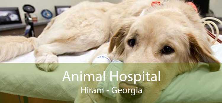Animal Hospital Hiram - Georgia