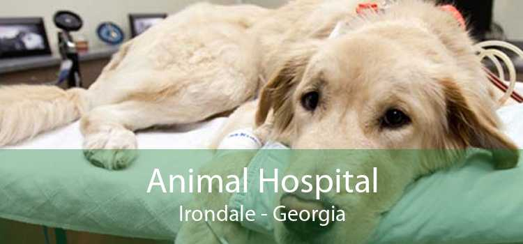 Animal Hospital Irondale - Georgia