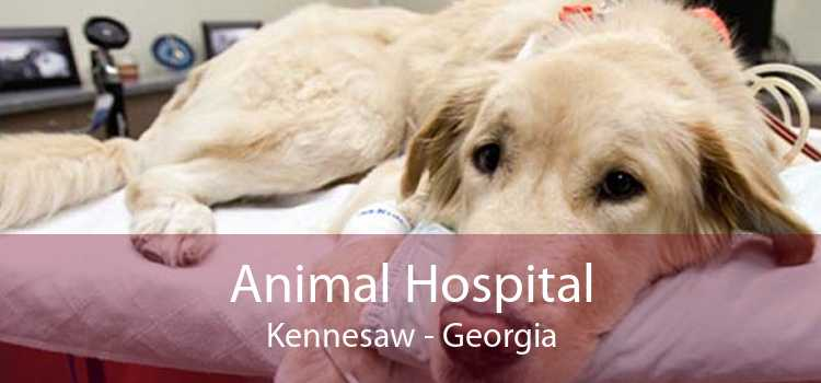 Animal Hospital Kennesaw - Georgia