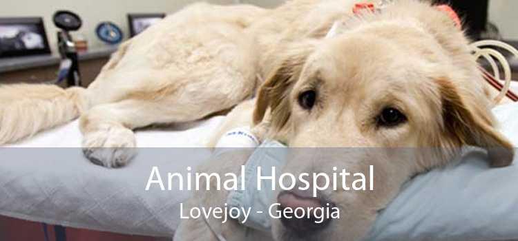 Animal Hospital Lovejoy - Georgia