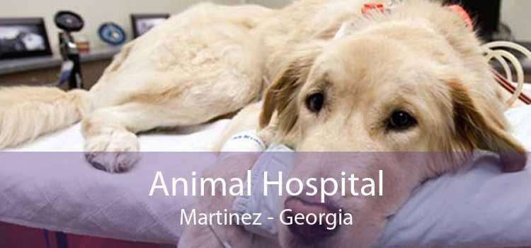 Animal Hospital Martinez - Georgia