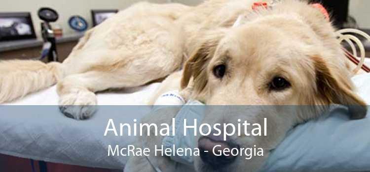 Animal Hospital McRae Helena - Georgia