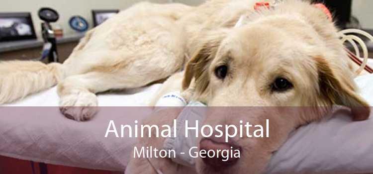 Animal Hospital Milton - Georgia