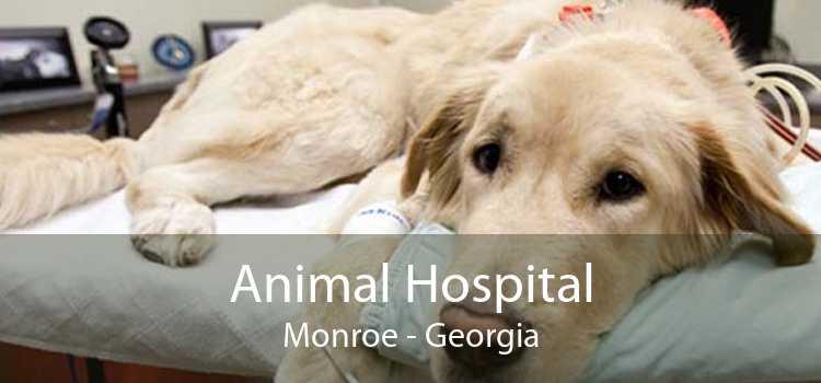 Animal Hospital Monroe - Georgia