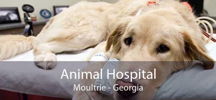 Animal Hospital Moultrie - Georgia