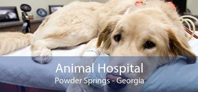 Animal Hospital Powder Springs - Georgia