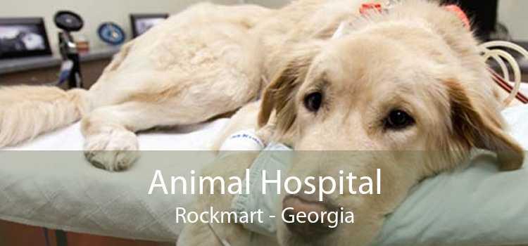 Animal Hospital Rockmart - Georgia