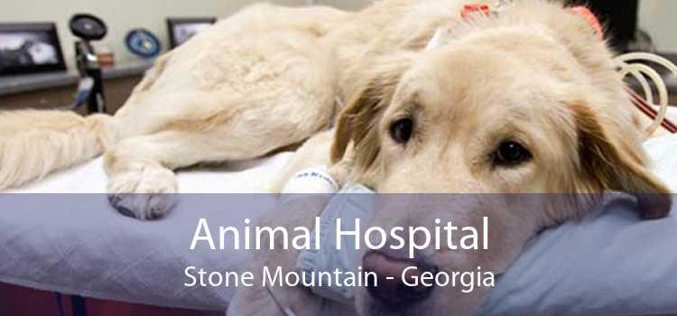 Animal Hospital Stone Mountain - Georgia