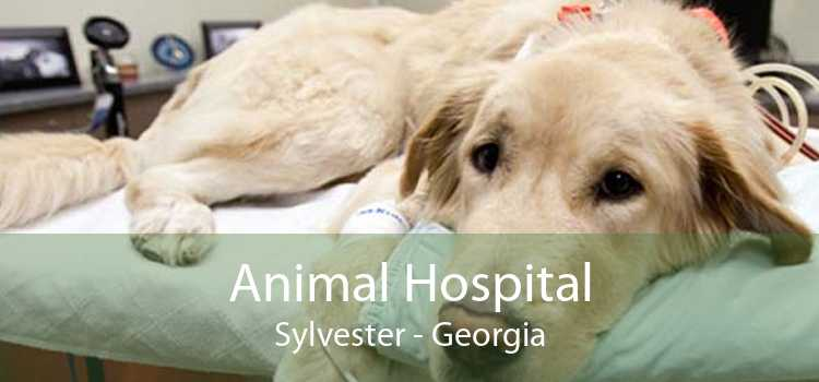 Animal Hospital Sylvester - Georgia