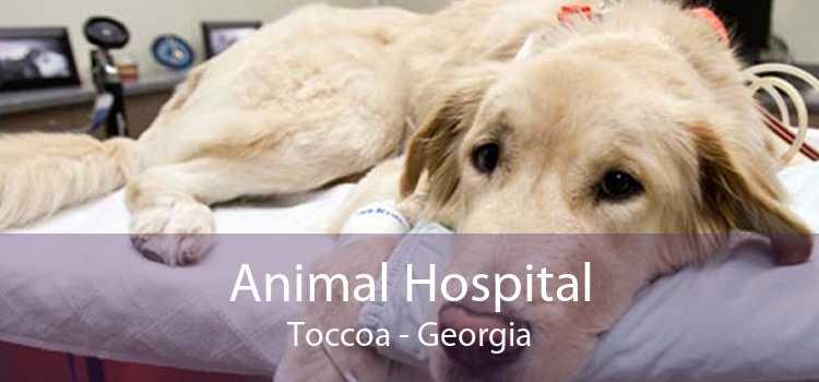 Animal Hospital Toccoa - Georgia