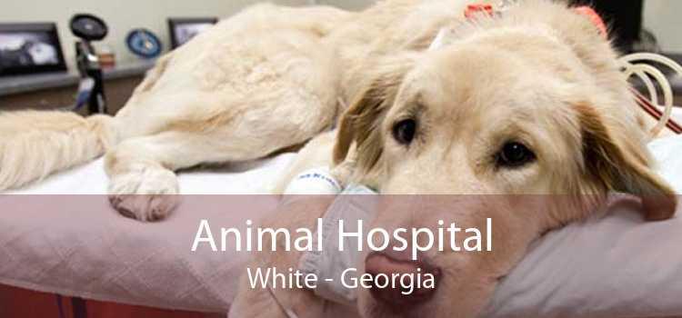 Animal Hospital White - Georgia