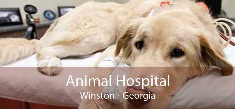 Animal Hospital Winston - Georgia