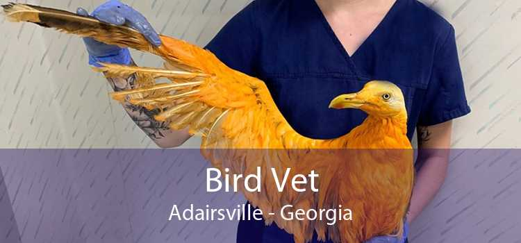 Bird Vet Adairsville - Georgia