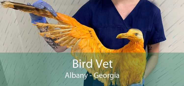 Bird Vet Albany - Georgia