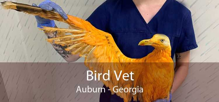 Bird Vet Auburn - Georgia