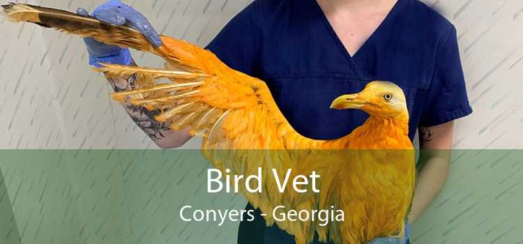 Bird Vet Conyers - Georgia