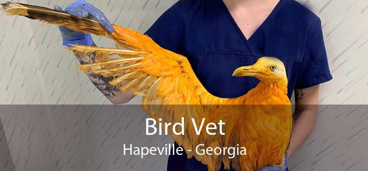 Bird Vet Hapeville - Georgia