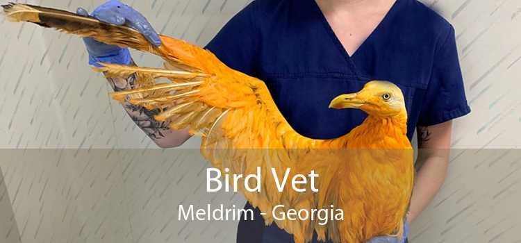 Bird Vet Meldrim - Georgia