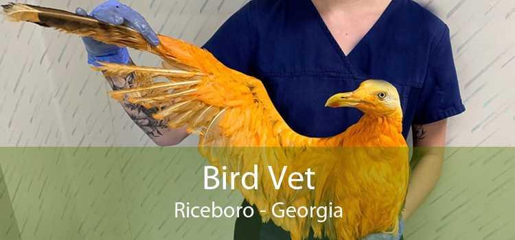 Bird Vet Riceboro - Georgia