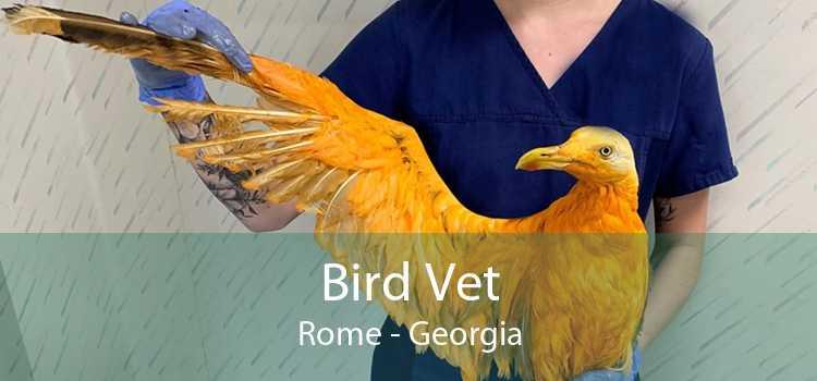 Bird Vet Rome - Georgia