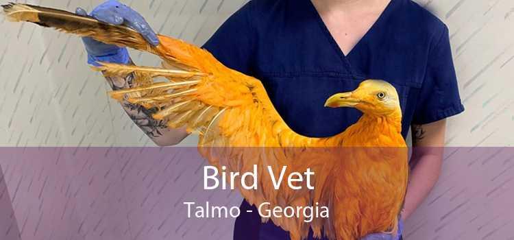 Bird Vet Talmo - Georgia