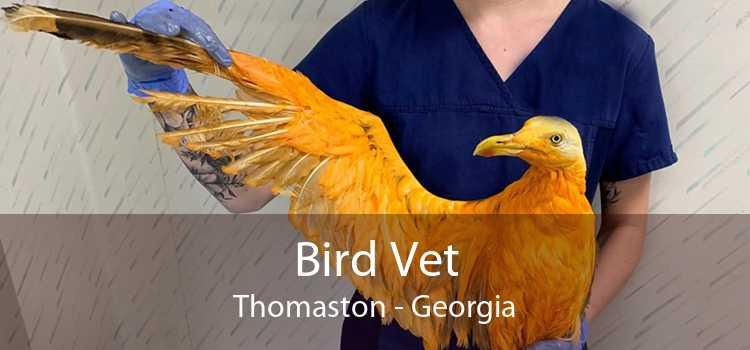 Bird Vet Thomaston - Georgia