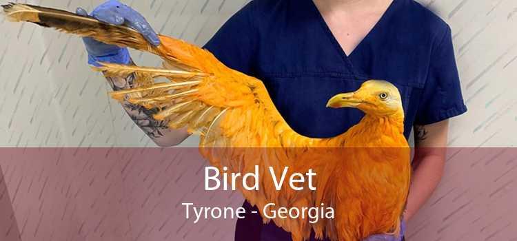 Bird Vet Tyrone - Georgia