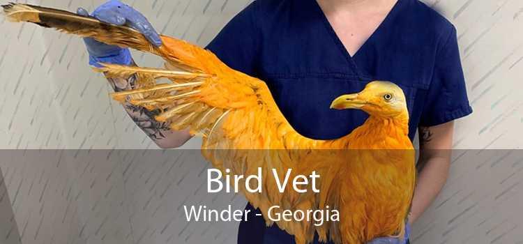 Bird Vet Winder - Georgia
