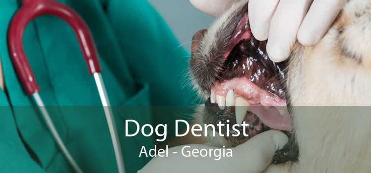 Dog Dentist Adel - Georgia
