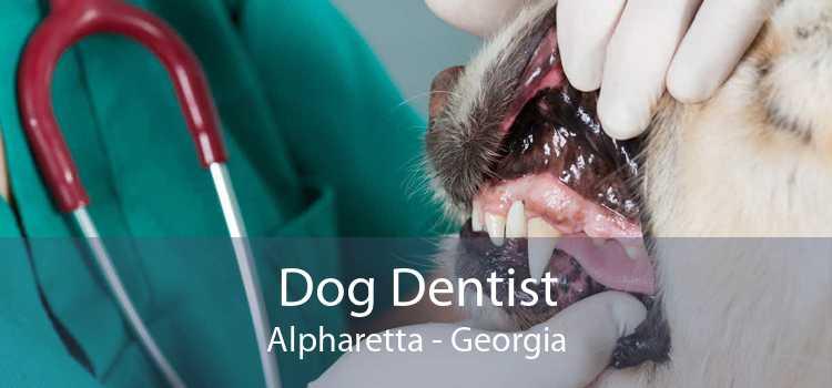 Dog Dentist Alpharetta - Georgia
