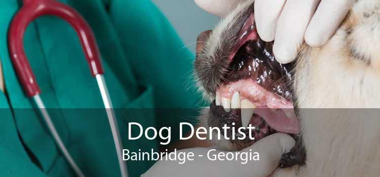 Dog Dentist Bainbridge - Georgia