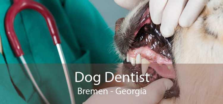 Dog Dentist Bremen - Georgia