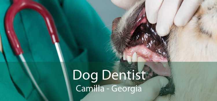 Dog Dentist Camilla - Georgia